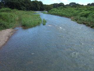 20080831_komagawa.jpg
